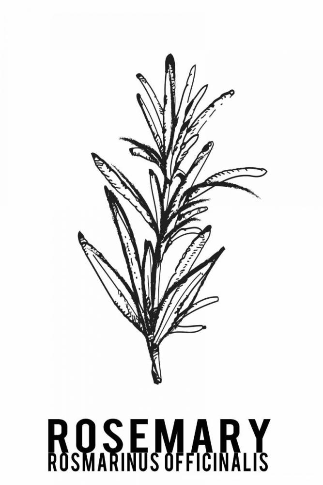 Rosemary herbs Waltz, Anne 166129