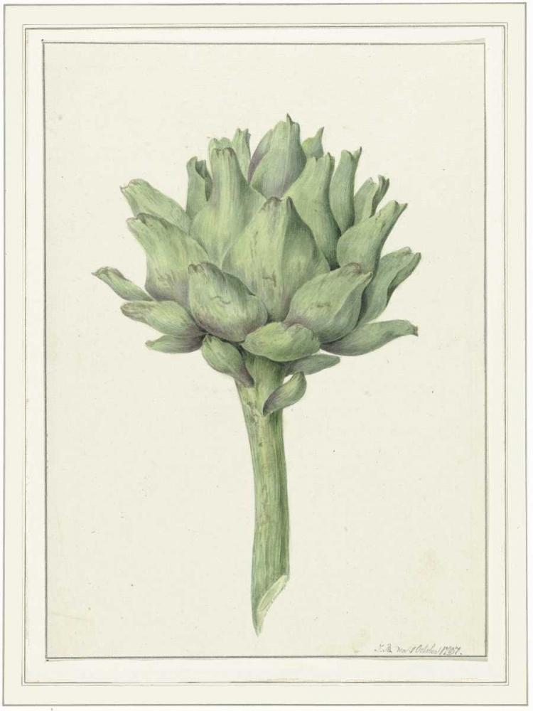 Classic veg Waltz, Anne 166065