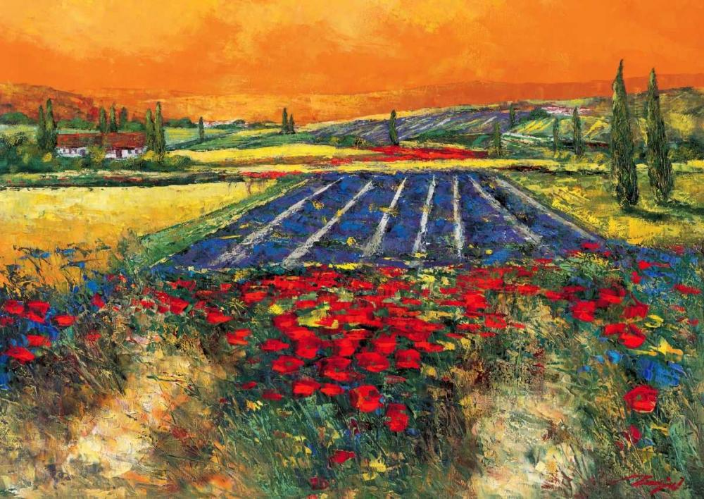 Provence Madjid 28989