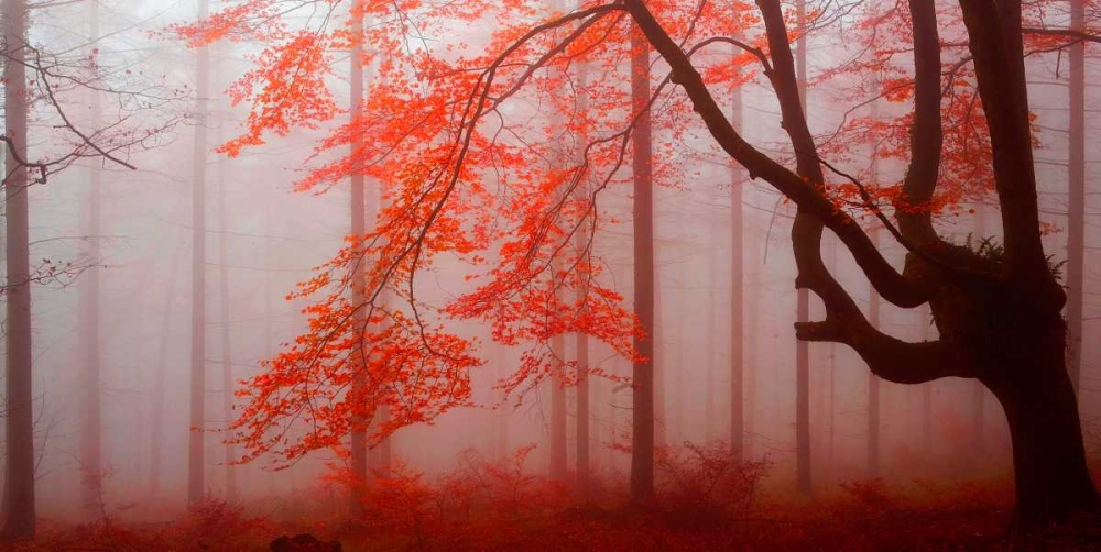 Red forest 807 Palacios, J.A. 28887