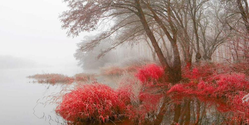 Foggy swamp 837 Palacios, J.A. 28907