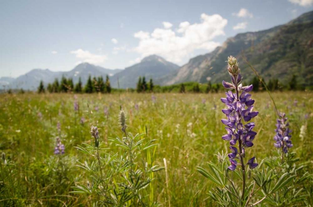 Glacier National Park Berninger, Amber 80806