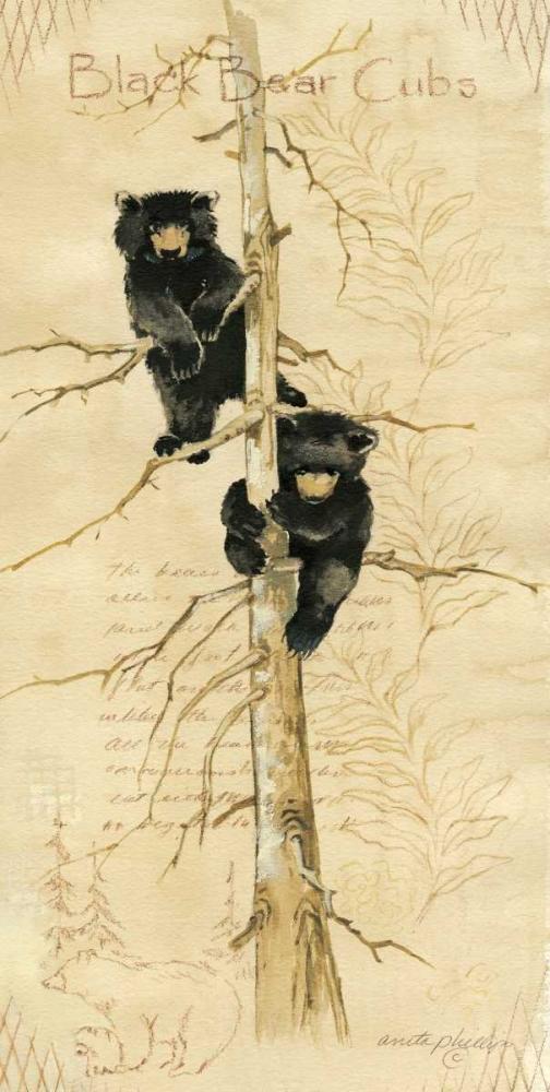 Black Bears Cubs Phillips, Anita 52354