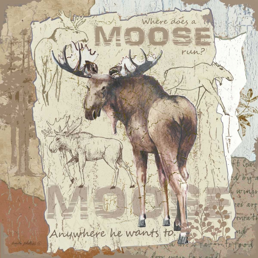 Moose Phillips, Anita 48231
