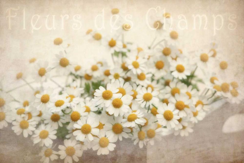 Fleurs des Champs Niele, Cora 87533