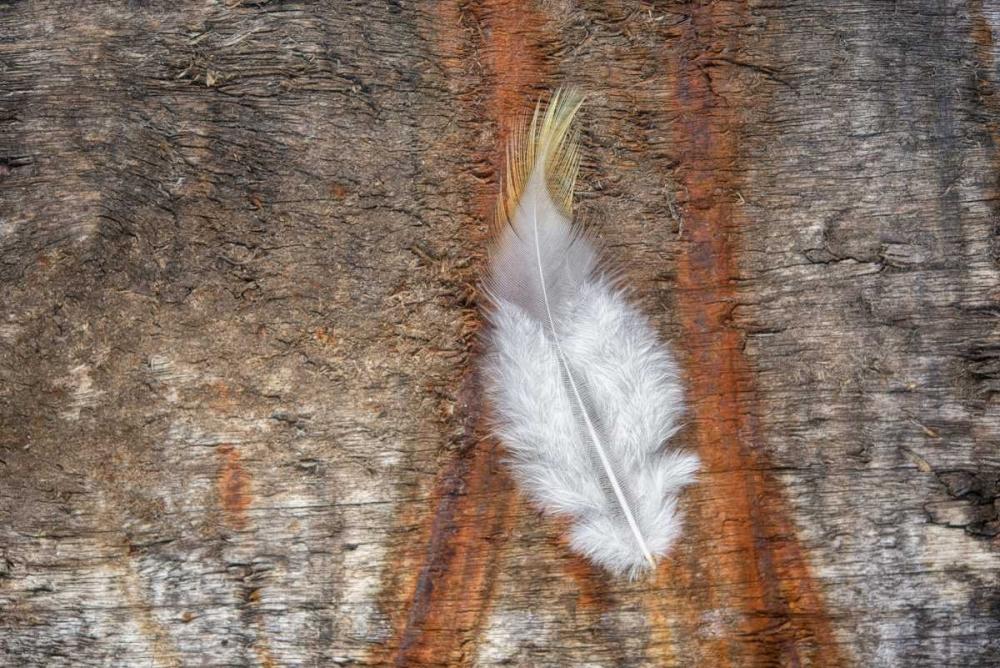 Downy Feather Niele, Cora 87657