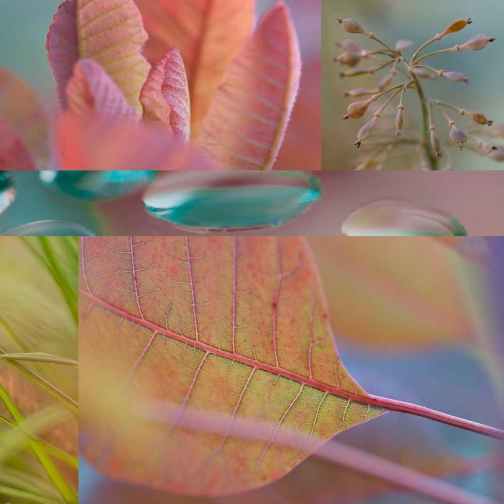 Continus Collage Niele, Cora 87669