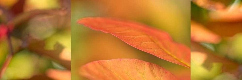 Apricot Collage Niele, Cora 87679