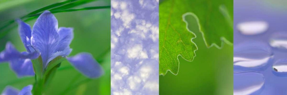 Green Blue Collage Niele, Cora 87683
