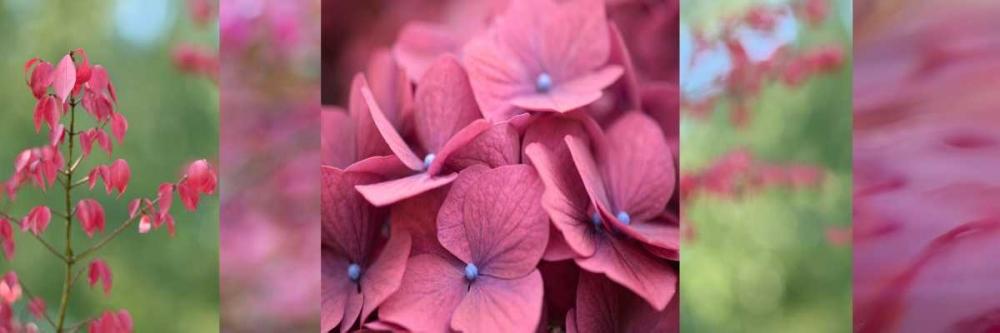 Pink Collage II Niele, Cora 87689