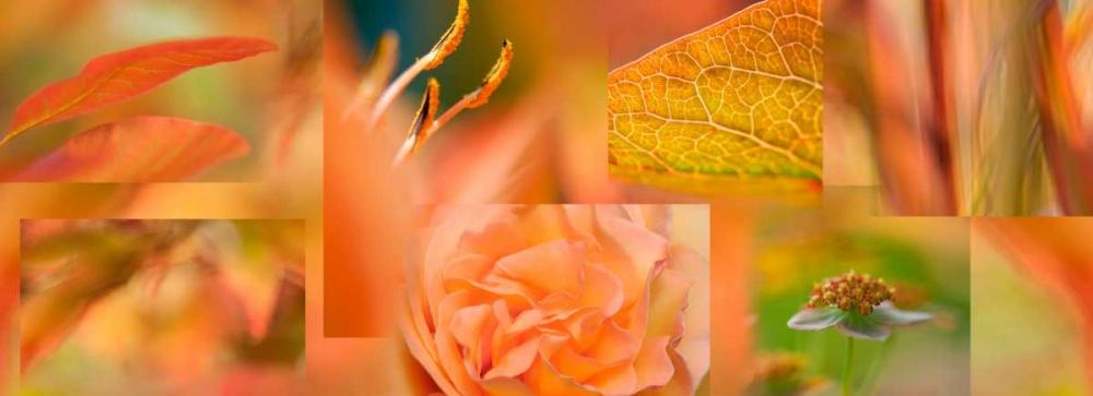 Copper Apricot Collage Niele, Cora 87693