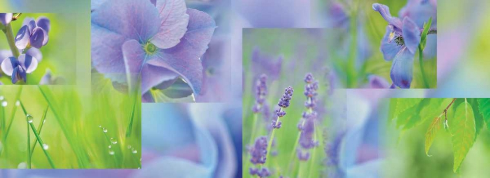 Violet Blue Green Collage Niele, Cora 87694