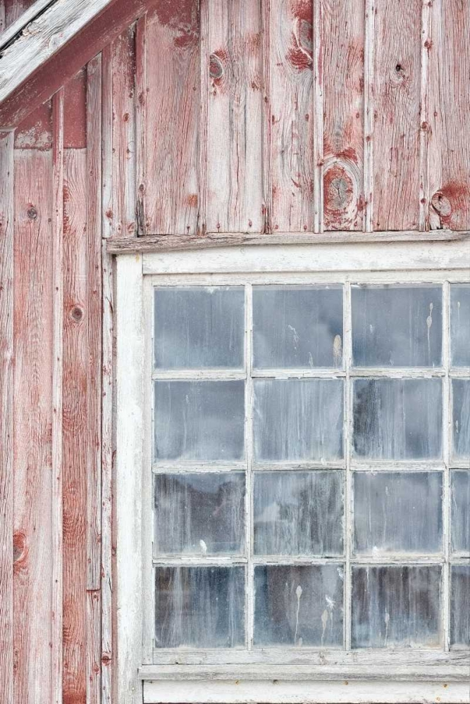 Window Niele, Cora 87704