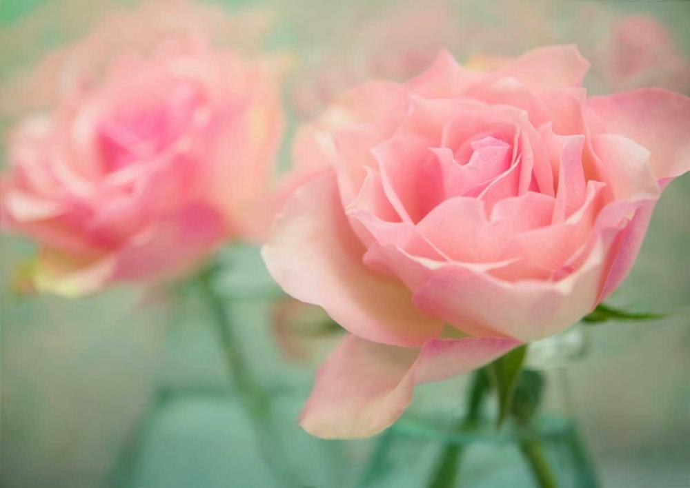 Roses Glass Vase Niele, Cora 97412