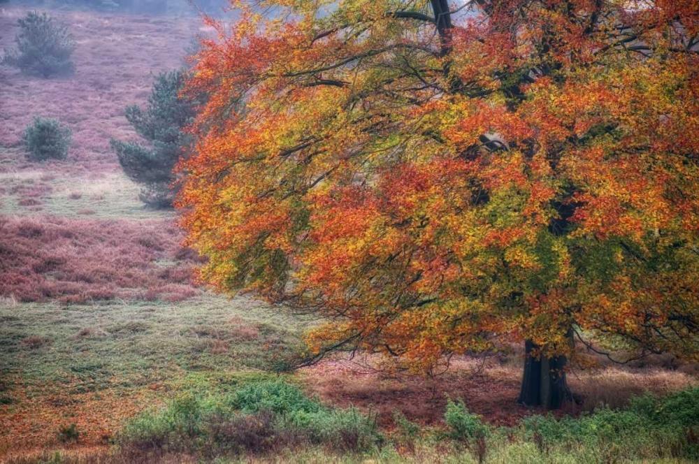 Autumn Tree IV Niele, Cora 104707