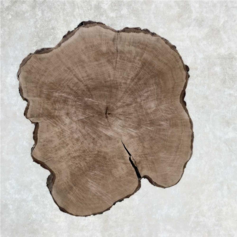 Tree Rings II Niele, Cora 149280