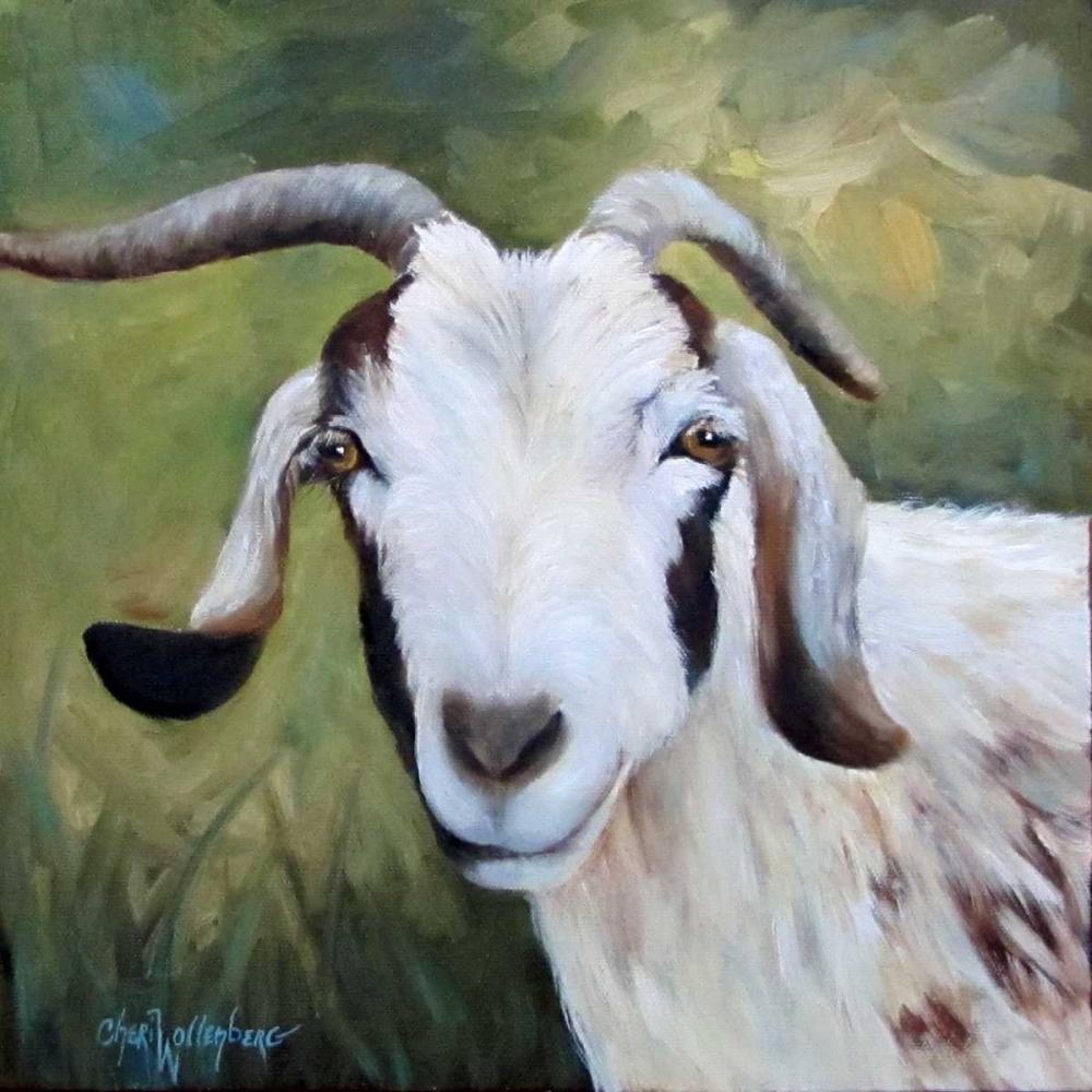 Susans Goat Billy Wollenberg, Cheri 87740