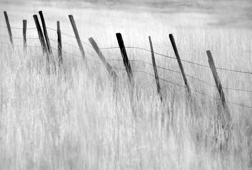 Fence Post Frates, Dennis 41627