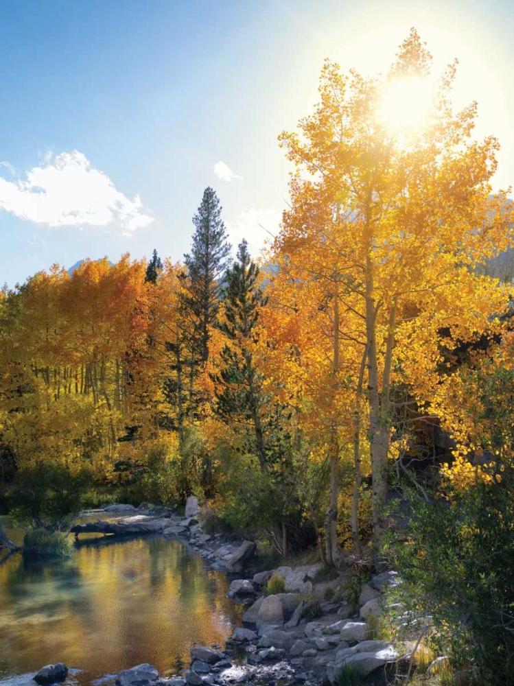 Autumn Sun Frates, Dennis 62104