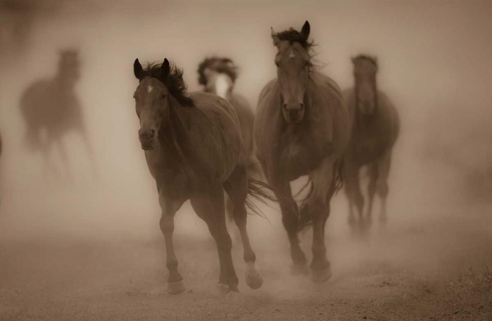 Sepia Horses II Crandall, Gary 41681