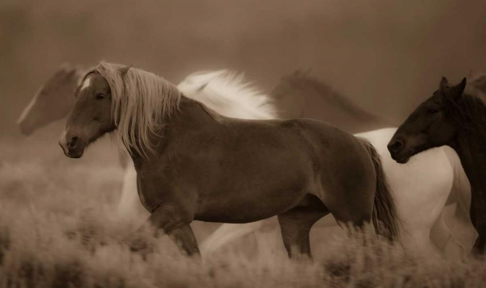 Sepia Horses III Crandall, Gary 41682