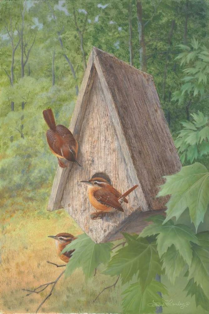 Bird House Henley, Bob 41689