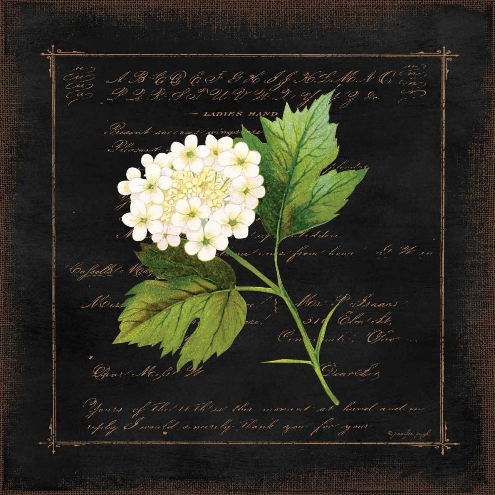 Floral II Pugh, Jennifer 88533
