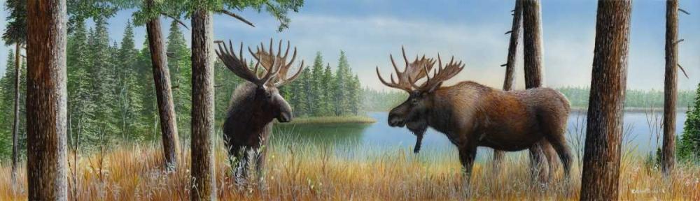 Moose Panoramic III Daniel, Kevin 48888