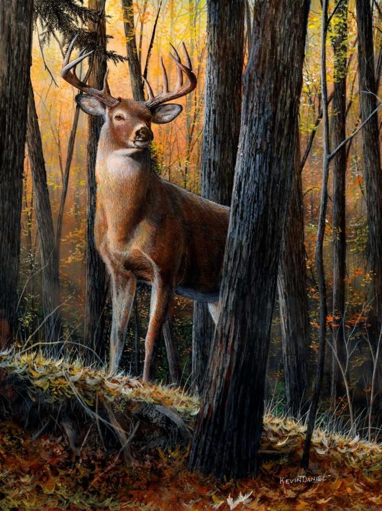 Autumn Monarch Daniel, Kevin 48889