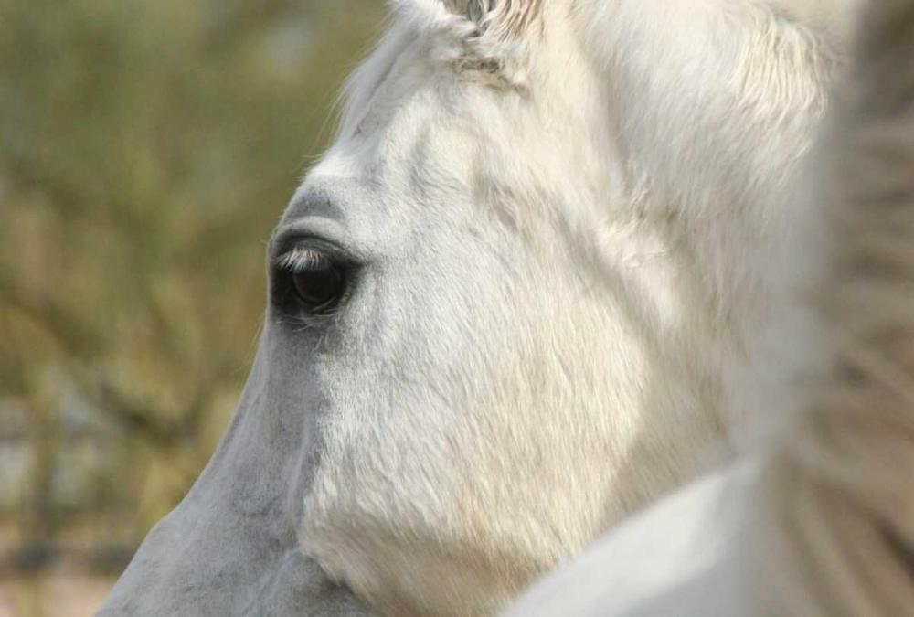 A Soft Eye Brooks, Kari 72879