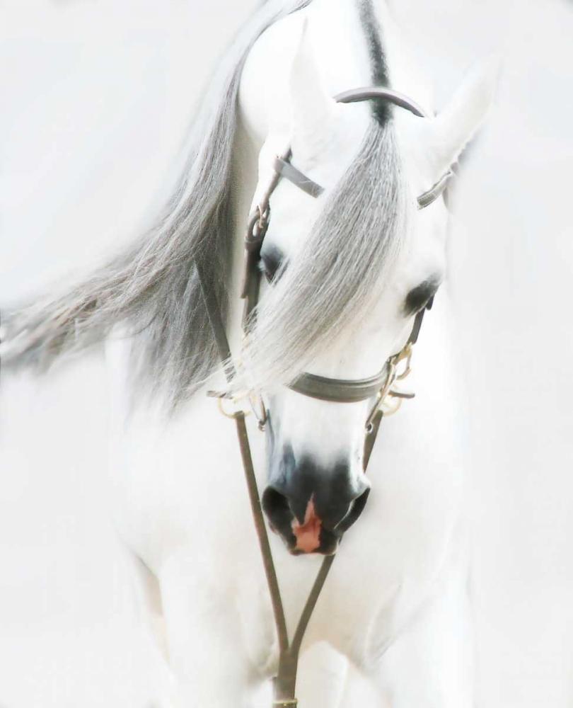 Dream Horse Brooks, Kari 97468