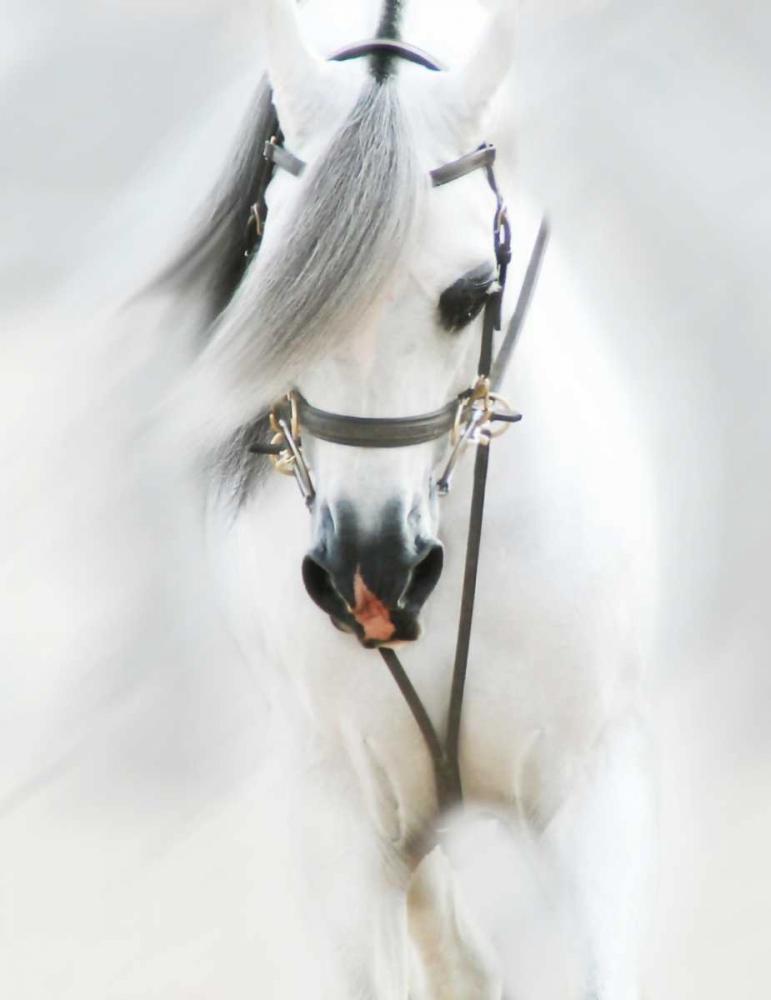 Dream Horse III Brooks, Kari 97469