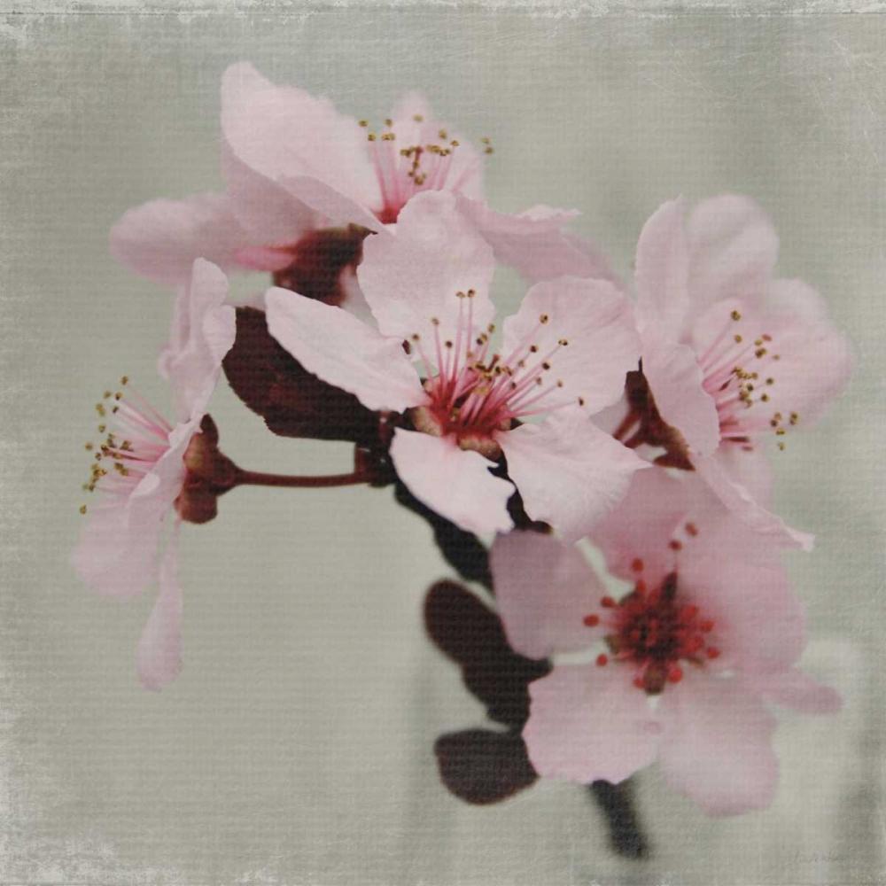 Pink Blossoms I Woods, Linda 104896
