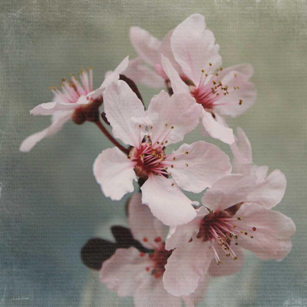 Pink Blossoms II Woods, Linda 104897