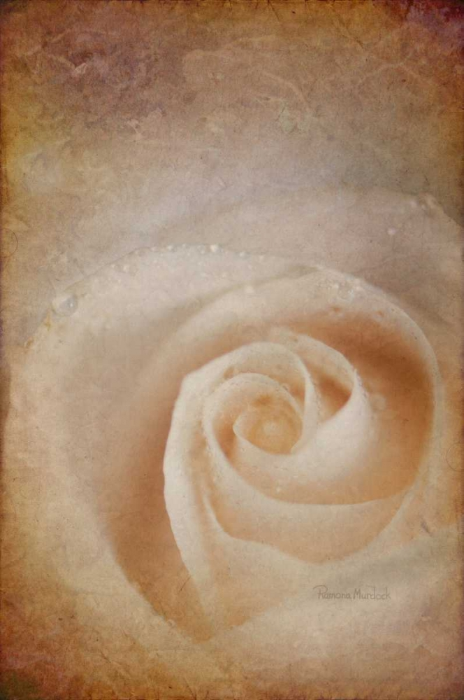 Faded Rose Murdock, Ramona 118633