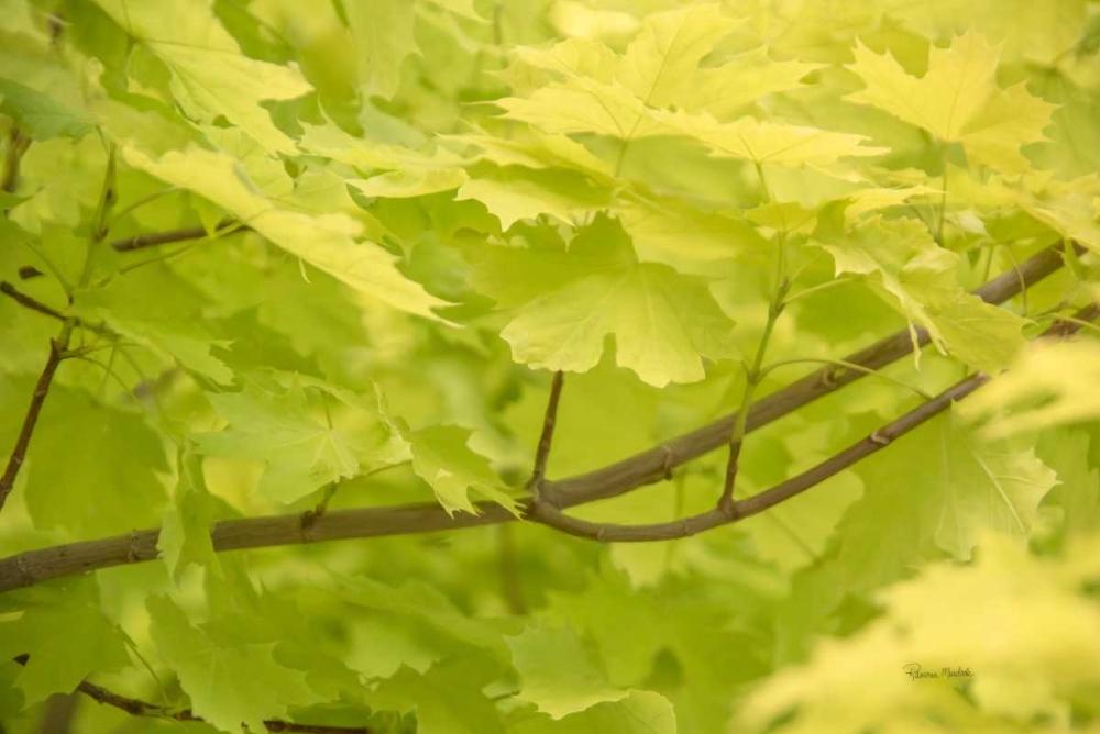 Spring Leaves II Murdock, Ramona 120044