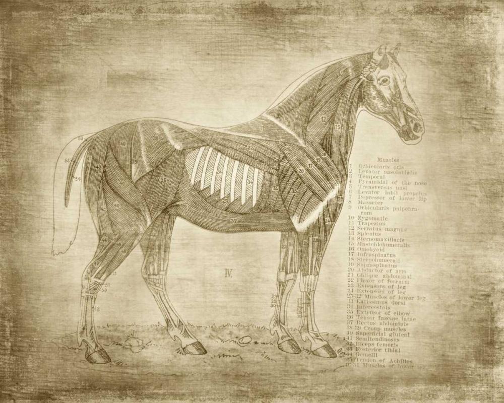 Horse Anatomy 401 Murdock, Ramona 141562
