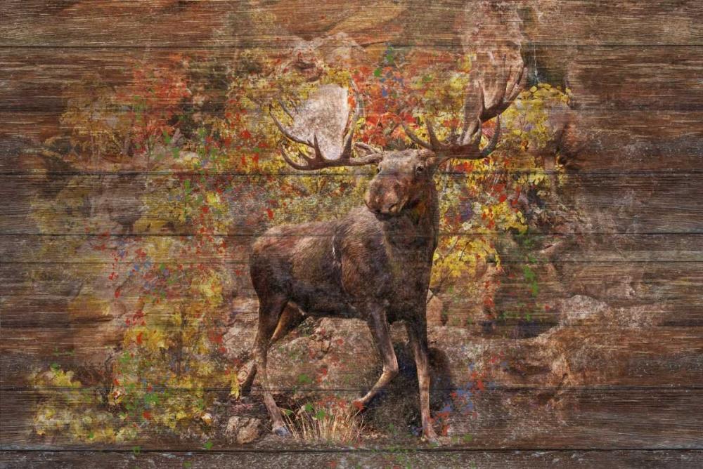 Moose Meadow Murdock, Ramona 141564