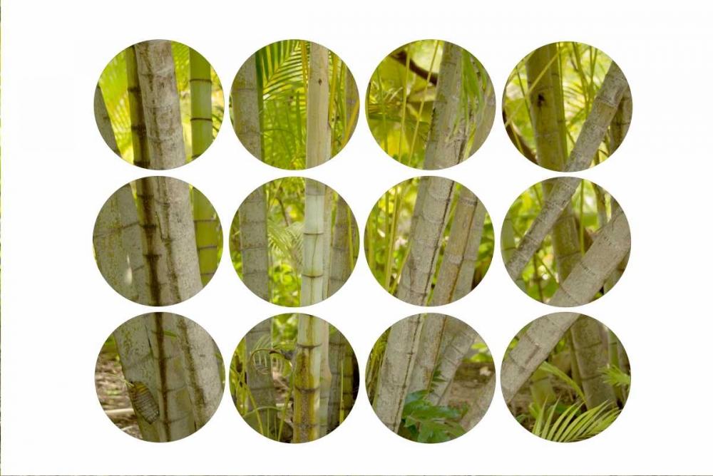 Bamboo Circles Murdock, Ramona 149477