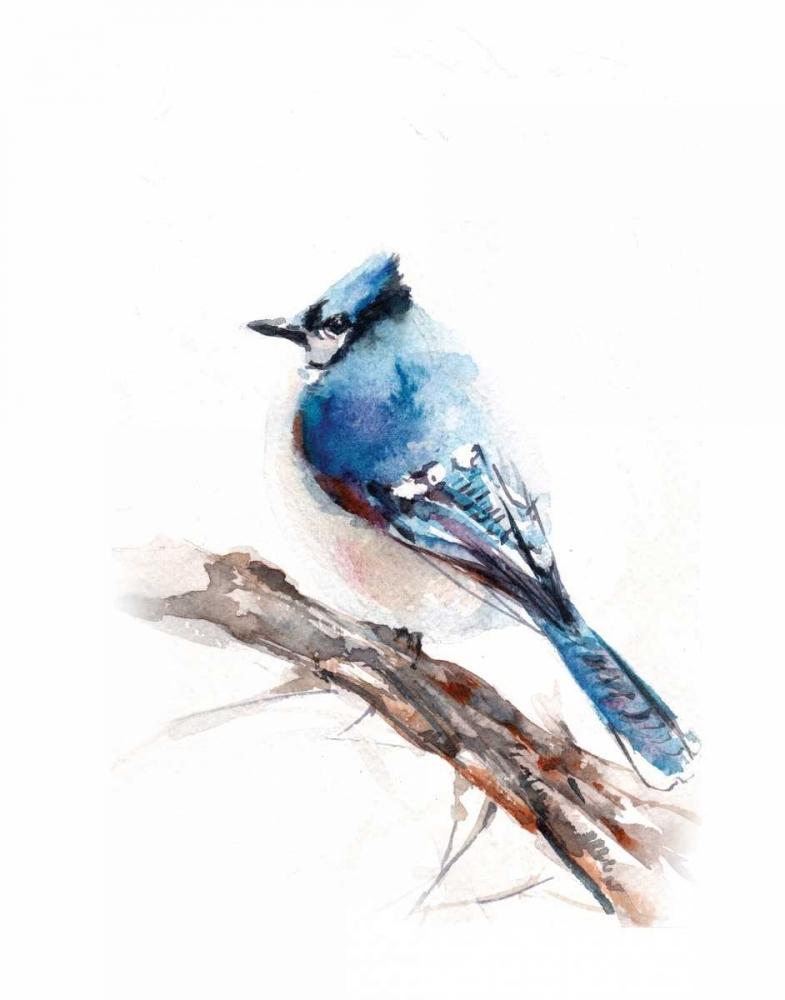 Blue Jay Rodionov, Sophia 156986