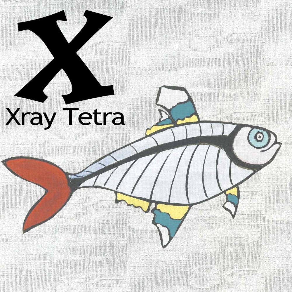X - X-ray Tetra Welsh, Shanni 73034