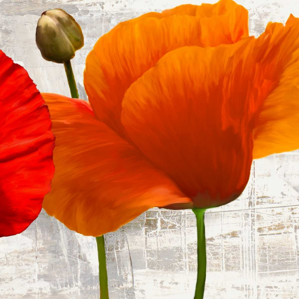 Summer Poppies II Thomlinson, Jenny 42728