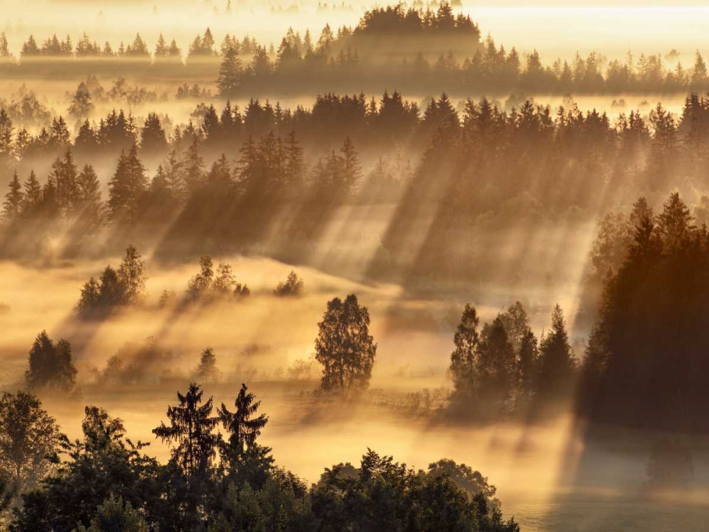 Fog impression at Sindelbachfilz, Bavaria, Germany Krahmer, Frank 118111
