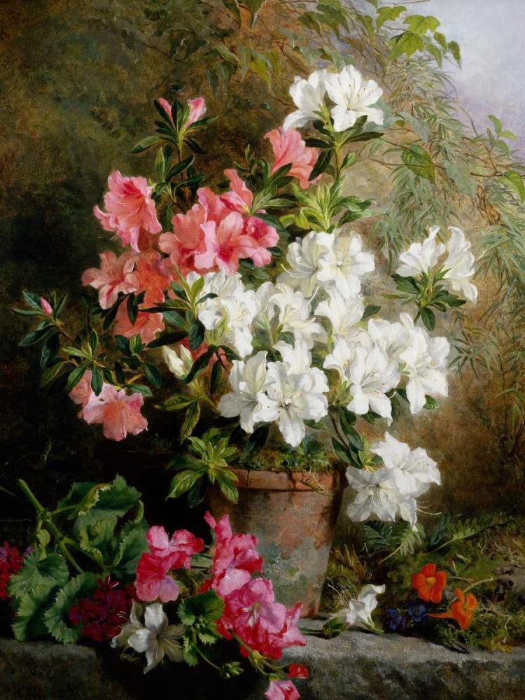 Still Life of Azaleas Feray Mutrie, Annie 162795