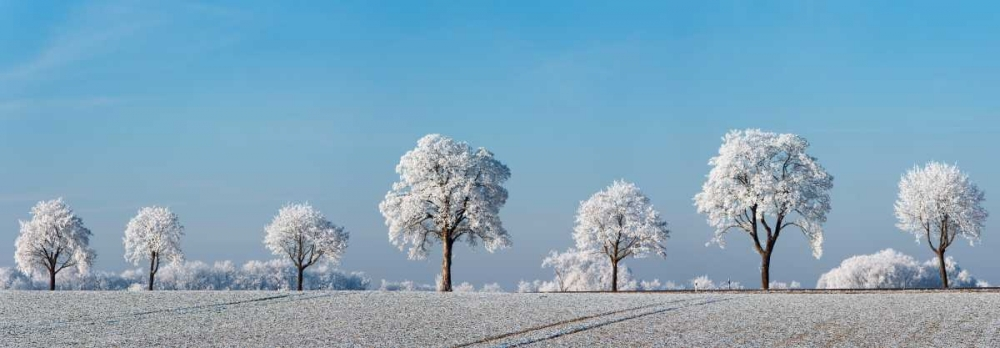 Alley tree with frost, Bavaria, Germany Krahmer, Frank 118225