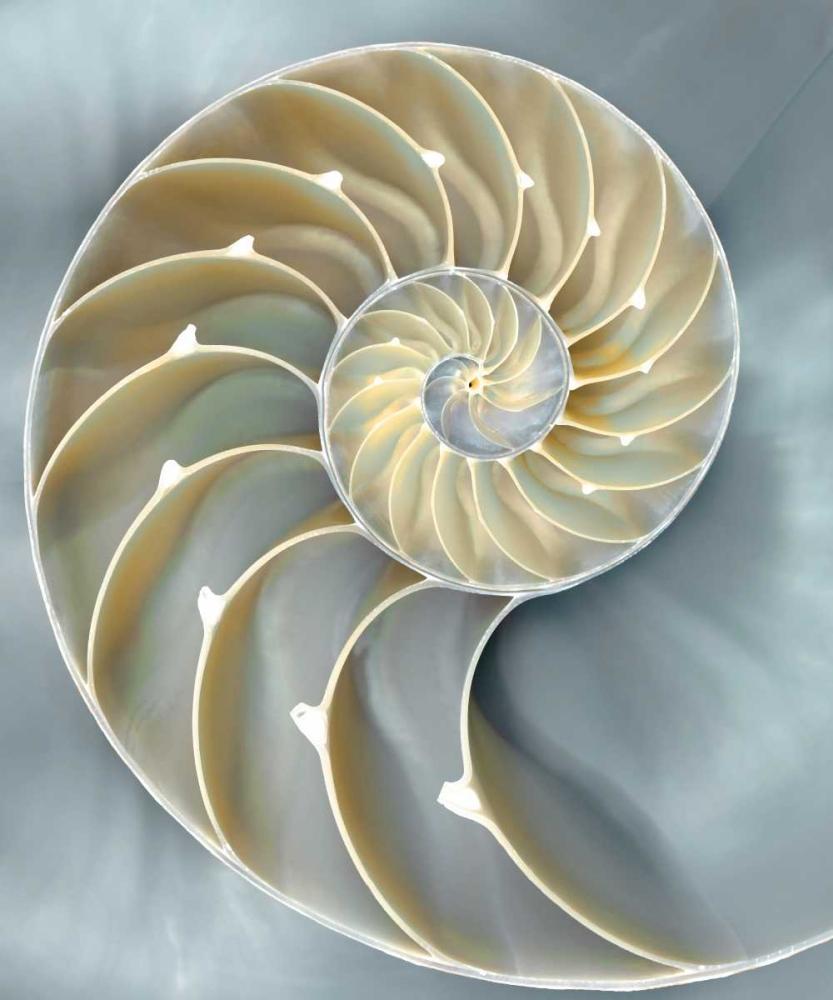 Nautilus in Blue I Kelly, Caroline 53109