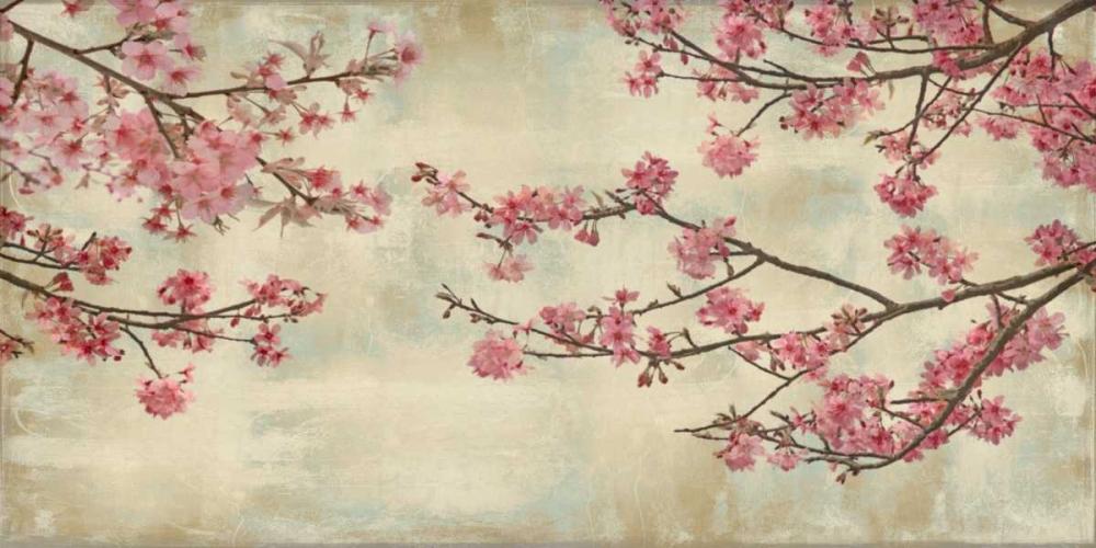 Cherry Blossoms Seba, John 52728