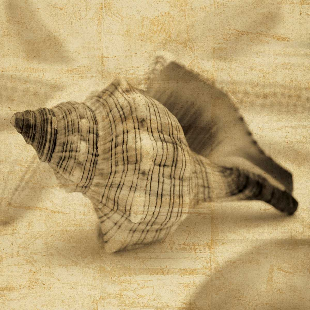 Conch Seba, John 54694