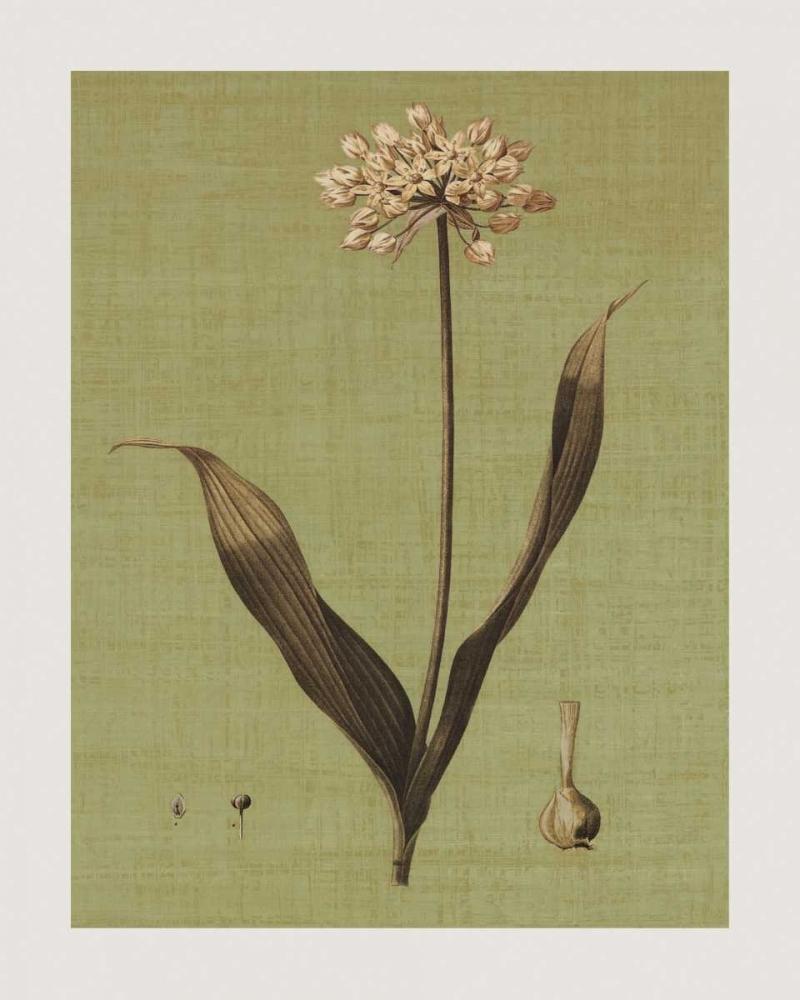 Botanica Verde III Seba, John 54715