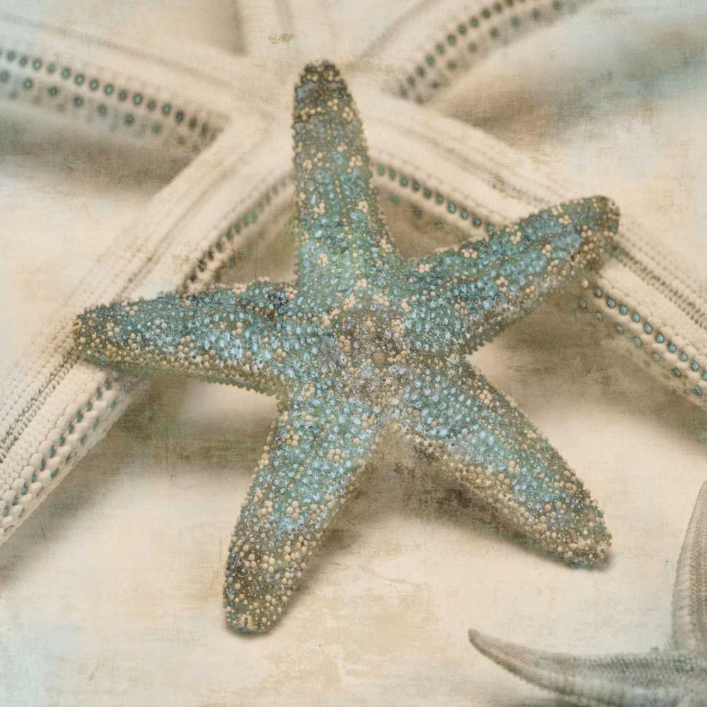 Coastal Gems III Seba, John 54759